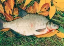 Ноябрьская рыбалка на дону