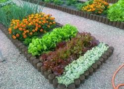 Овощи в цветниках