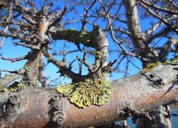 Если на деревьях свирепствует лишайник