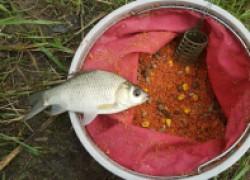 Прикормки для рыбы в холодное время года