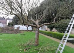 Снижение высоты деревьев