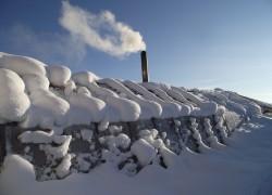 У счастливых людей даже среди снега зреют мандарины и хурма