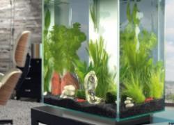 Готовим аквариум для рыбок