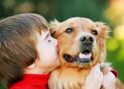Собаки защищают от астмы и экземы