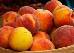 Как бороться с курчавостью персика?