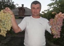 Допинг для винограда