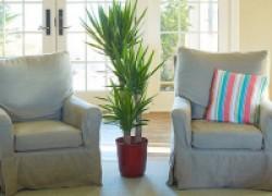 Украсьте свой дом – посадите юкку