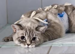 Весна: коты требуют любви и ласки