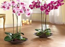 Четыре условия для идеальных орхидей