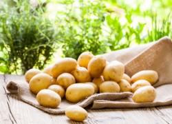 Сорта картофеля, которые рекомендуют посадить специалисты