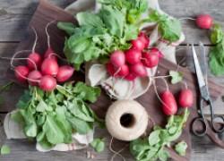 Можно ли собирать семена с редиса
