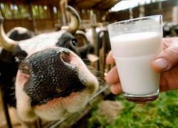 Сворачивается молоко! Как быть?