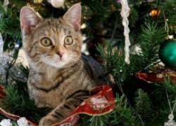 Кот, не трогай елку!