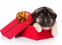 Щенок − не подарок!