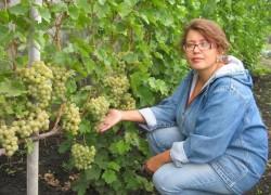 Чтобы куст винограда не надорвался