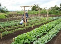 Выращивание овощей по Митлайдеру