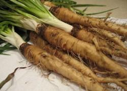 Овсяный корень – необычная морковь
