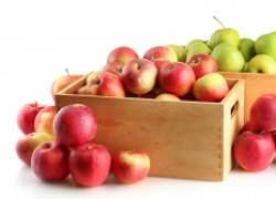 Зимняя элита – лучшие зимние сорта яблок