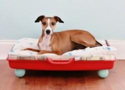 Лежанка для собаки из старого чемодана