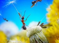 Совет огородника: с муравьями борюсь гремучей смесью
