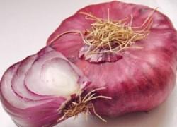 Как вырастить крымский лук
