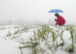 Посевная по снегу