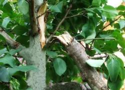 Что делать, если сломалось дерево