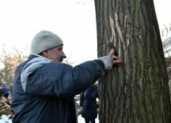Зачем забивают гвозди в дерево?