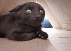 Моя новая работа довела кошку до стресса