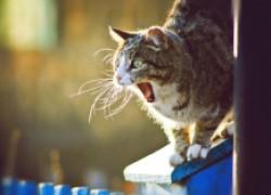 Почему коты орут в марте?