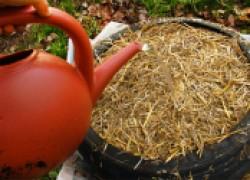 Готовим картошку к посадке: проращиваем в опилках