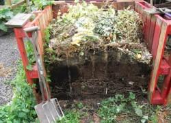 Собираем урожаи на... компостной куче