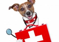 Ветеринарная аптечка для собачника
