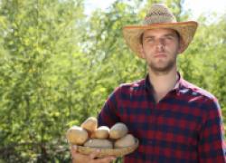 Как собрать полтонны картошки с сотки