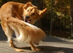 Почему собака грызет себе хвост