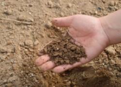 Оптимальный возраст рассады для посадки в грунт