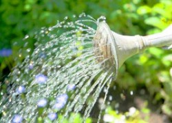 Поливать сад или не поливать?