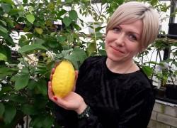 Ольга Стребкова: между работой и выращиванием лимонов я выбрала лимоны