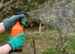 Как помочь деревьям отцвести
