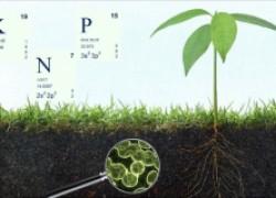 Угадываем потребности растений по листве