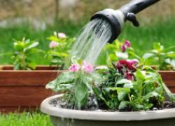Какой водой вы поливаете растения