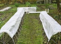 Как смягчить солнечный удар для растений