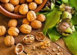 Как собирать орехи ведрами
