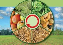Севооборот для огорода: как с двух соток прокормить семью