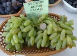 Хусайне келин бармак: саблевидный виноград