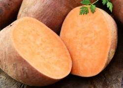Как выращивать сладкий батат?