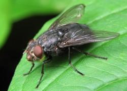 Бояться ли нашествия мух?