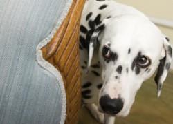Собака боится улицы! Как снизить стресс?