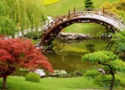Дикий сад: не лишайте себя удовольствия