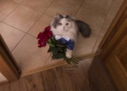 Кошка дарит цветы хозяйке